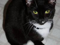 Tuxedo - Kitty - Small - Young - Female - Cat Isn't