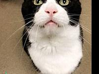 Tuxedo Male's story Tux is a very sweet boy. He is a