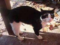 Tuxedo - Mya - Medium - Adult - Male - Cat 5 year-old