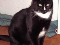 Tuxedo - Space Invader - Medium - Young - Male - Cat