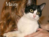 Tuxedo - Stacia - Medium - Young - Female - Cat Stacia