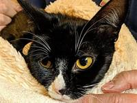 Tuxie's story I am a little shy right now but I promise