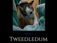 Tweedledum - Cutest Boy Kitty!'s story You can fill out