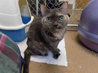 TWEEKERS's story Senior cat. Surrendered due to moving.