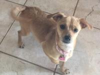 PRE_ADOPTION ONLY: Tweeny is a small 10 lb female
