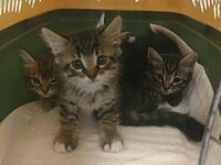 Twelve Kittens's story (Group name: The Twelve) Age 8