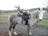 I have a 4yr. old dapple grey, TWH gelding for sale.