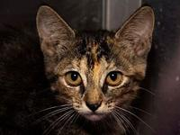 Twiggy's story Came in with mom Cindy Clawford and