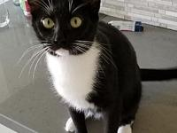 Twila's story Are you looking for a darling kitty? Look
