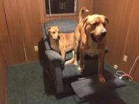 I am looking for a great home for my boys. They are