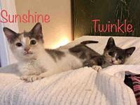 TWINKLE's story Twinkle and Sunshine are a pair of