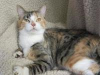 Twinkle's story Twinkle is a beautiful, sweet girl who