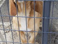 Please go to our website at www.logancohumane.com to