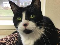 Twix is as adorable as they come. This petite tuxedo