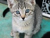 Twix's story Adoption fee is $75, this kittens approx