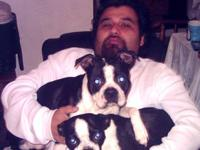 I have 2 Adult Boston Terriers that I would like to