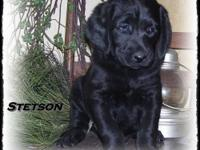 I have two beautiful young puppies, Stetson and Dally.