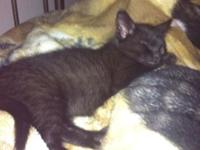 I HAVE TWO ADORABLE MALE KITTENS AVAILABLE FOR