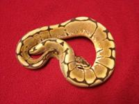 I have two beautiful ball pythons both are use to being