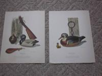 I have two duck prints by Tom Cotney. They are on very