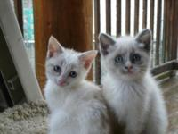 Ivy and Evie are available for adoption. They are a mix