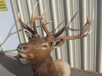 I HAVE TWO ELK MOUNTS FOR SALE. THE FIRST IS IN PERFECT