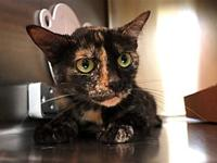 Two Face's story Two Face is a friendly girl hoping to