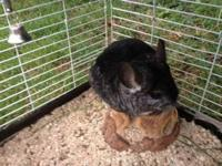 I have two female chinchillas in need of a home. It's a