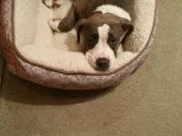 Pups looking for living home...1st 4 pic it's blue