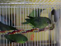 Pair 1- $250. Proven pair and really bonded! Birds