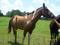 one horse is named Moon she is a 5 yr.old brown and