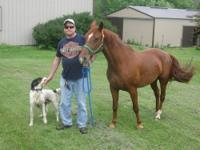 I have two very nice gaited horses for sale. # 1 is a 8
