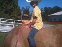 Registered 13 year old Pasa Fino great trail horse and