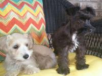I have two left- one playful black male $350 and a