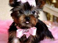 Male and female teacup yorkie puppies available email