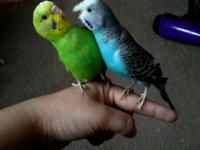 I have two beautiful baby parakeets that need homes
