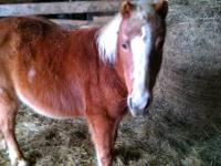 i have two ponies for sale one registered class b
