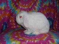 I have two young adult rabbits for sale! Located in