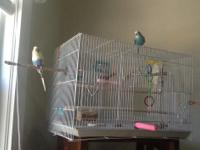 Two beautiful keets under one yr.old male and female