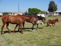 I am looking for a good home to place my horses. They