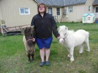 We have for sale these two miniature horses (geldings)