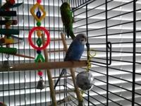 We have 2 male parakeets that require a great home. We