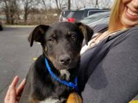 SCCR recently rescued a litter of Shepherd mix pups who