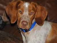 TX/Ozzie's story Hi, my name is Ozzie and I'm as
