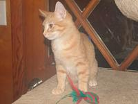 ty's story Hello My name is Ty. I am about 4 months old