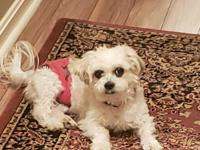 Ty is a 12 yr  young, 6 lb. Shih Tzu. He is in good