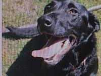 Tybee's story Tybee is a super friendly and playful lab