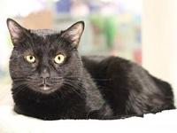 Tyke's story Tyke is a sleek, beautiful, black cat whos