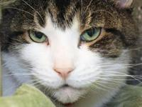 Tyler's story Tyler might be a senior cat at