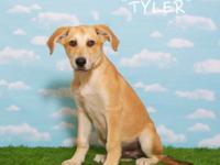 Hello! Tyler here!  I am a five-month-old retriever mix